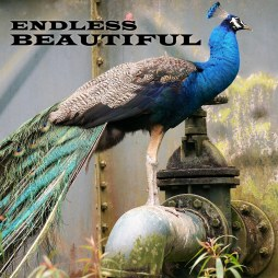 EndlessBeautifuliTunes